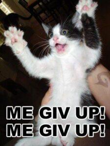 gato-desiste