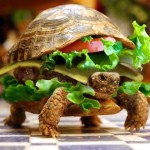 Os Turtle Traders de Richard Dennis: Parte 1